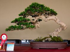 NATIONAL BONSAI & SUISEKI EXHIBITION 2011 IN JAKARTA