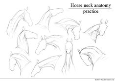 Only for personal use. TRACING IS NOT ALLOWED This isn't a lineart to color, this is detailed sketches of horse neck to practice horse anatomy. Horse Drawings, Animal Drawings, Art Drawings, Horse Head Drawing, Body Drawing, Anatomy Drawing, Neck Drawing, Animal Sketches, Drawing Sketches