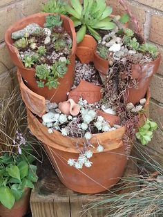 Recycle broken pots ...succulent garden ..my attempt