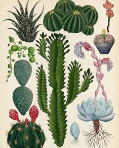 Found this illustration this morning via @tumblr  #illustration #drawing #succulents #cacti #africanmilktree #echeveria #cactus #cactillustration #succulent #lithop #lithops #stringofpearls #succulentlove #succulentobsessed #green #plants #plantsofinstagram #plantsmakepeoplehappy