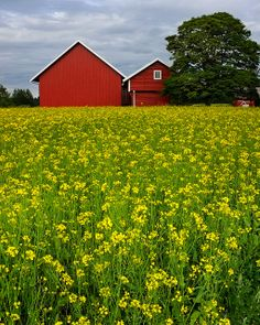 Norway -- Pretty :) I've always wanted to go back to the farm my ancestors came from in Norway.
