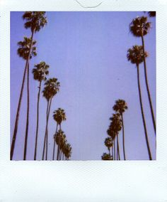 Palm trees - Polaroid 779 - 20110709 - 779 - 09_2009 - Scan - img064_72dpi by kevindean, via Flickr