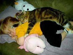 Fotos de gatos com bebés