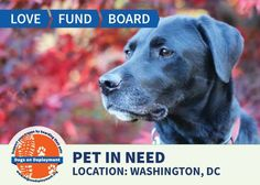 Military member in DC needs help from a DoDBoarder to watch her dog Barley while working overseas. Barley is a sweet pup and very submissive. She loves people and is good with other dogs. Can you help?  More info: Location: Washington, DC...June 12, 2015 – September 25, 2015...Pet Name: Barley...Breed: Labrador Retriever...Gender: Spayed Female...Size: Large (46 – 65 lbs.)...Age: Adult (4 – 9 years) Visit www.dogsondeployment.org to learn more about this pet, register and contact the…
