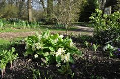 Mothering Sunday Guided Walk at Fairhaven Garden, Norfolk Broads, Sunday 15 March 2015