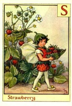Alphabet Fairies:  Strawberry by Cicely Mary Barker