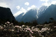 Valley of Flowers, Yumthang, North Sikkim,India