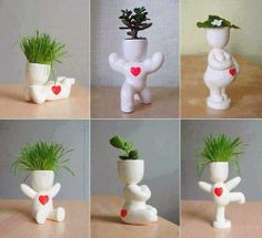 Hair Man Plant DIY White Man Plant