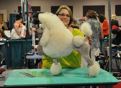 Kat Salemi | Colorado Springs Pet Grooming | National Certified Master Groomer <3