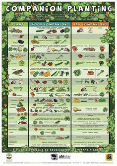 Companion Gardening Companion planting guide - Companion Planting is so easy and so effective See what plants grow well together w/ this printable Companion Planting Chart, Planting Ideas, FREE resources Veg Garden, Easy Garden, Garden Plants, Veggie Gardens, House Plants, Raised Vegetable Gardens, Indoor Plants, Vegtable Garden Layout, Pool Garden