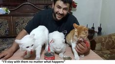 This Man Cares for Cats Left Behind in War Zone and Will Stay with Them ...