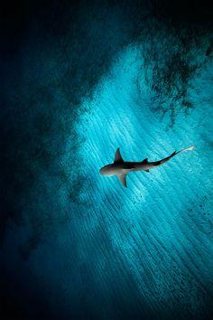 amores perros - ponderation:   Under The Sea by  Jorge Cervera...