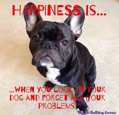 Happiness is...a French Bulldog.