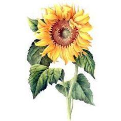 Sunflower image by AdamMay on Photobucket