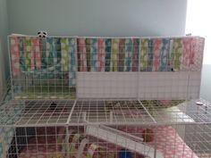 Closed multi level Guinea pig c&c cage Diy Guinea Pig Cage, Guinea Pig Care, Guinea Pigs, Guinea Pig Breeding, C&c Cage, Pigs Eating, How To Get Sleep, Newspaper, Pig Breeds