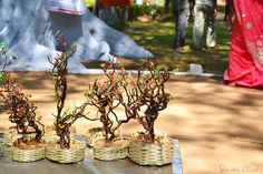 Bonsai Miniatures : http://sharmiclicks.blogspot.in/2012/01/bonsai-minatures.html