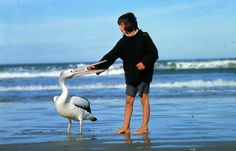 "I think we all wished we were friends with a Pelican after seeing ""Stormboy."""