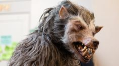 #1537827, werewolf category - Wallpapers for Desktop: werewolf backround