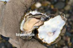 Fanny Bay Oysters, Fanny Bay BC - smooth creamy and oh so fresh oysters. Fresh Oysters, Yummy Snacks, Restaurants, Stuffed Mushrooms, Tasty, Victoria, Vegetables, Shirt, Desserts