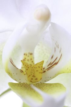 #Orchids #flowerphotography fine art at https://rothgalleries.wordpress.com/2018/04/16/behind-the-shot-of-an-intimate-white-orchid-flower-macro-photograph/