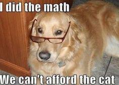 #dothemath #dogwithglasses #soooofunny