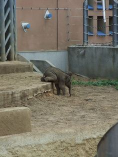 21 Cute baby elephant pictures