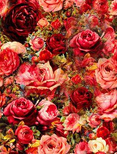 171717_rose-garden.gif 350×460 pixels