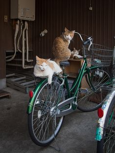 Daisy, Daisy,  Give me your answer do!  I'm half crazy,  All for the love of you!  It won't be a stylish marriage,  I can't afford a carriage  But you'll look sweet upon the seat  Of a bicycle made for two.