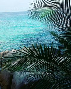 "theadventurechild: ""  Jungle/tropical blog """