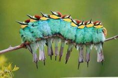 We're a Caterpillar!