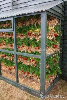 Strawberry garden - Plants - Straw bale gardening - Growing strawberries - P. Strawberry Beds, Strawberry Planters, Strawberry Garden, Fruit Garden, Strawberry Patch, Strawberry Tower, Diy Garden, Dream Garden, Garden Projects