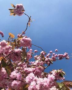 Cherry blossom tree, KEYELL - Lifestyle and Travel blog