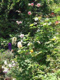 ガーデニング:宿根草のお庭
