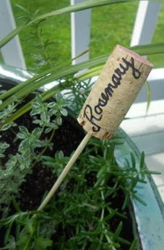 Craft For The Uncrafty! Write the herb name with sharpie on the cork and put the cork on a skewer and voila' a herb marker.Write the herb name with sharpie on the cork and put the cork on a skewer and voila' a herb marker. Herb Markers, Plant Markers, Outdoor Projects, Garden Projects, Diy Jardin, Shine Your Light, Cork Crafts, Shell Crafts, Bottle Crafts