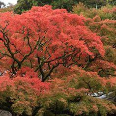 福岡市内から1時間ほどで行ける糸島市の雷山の紅葉がおすすめです。