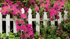 Good fences make good neighbors, especially when combined with beautiful blooms. Here are four different ways to marry the two