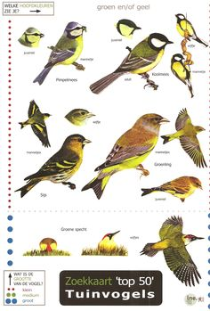 Field Guide to British Garden Birds - laminated to make it shower-proof and robust for use outdoors Common Garden Birds, Bird Watching Gifts, Green Woodpecker, Bird Identification, Great Tit, British Garden, Eden Project, Field Guide, Small Birds