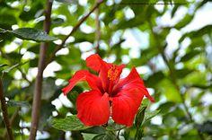 Quinta entrega - Flores de Lisboa en 35mm - Con la cámara en la mano