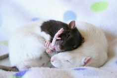 Snuggle time!!