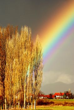Under the rainbow Under The Rainbow, Love Rainbow, Rainbow Colors, Beautiful Sky, Beautiful Places, Beautiful Pictures, Rainbow Magic, Rainbow Connection, Nature Pictures