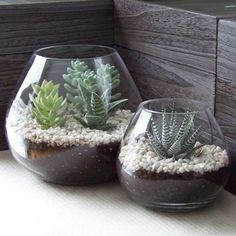Doing these for our patio table centerpiece!