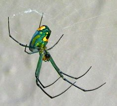 pics of spiders | EcoGlimpse.com | Nature Photography, Commentary, Gifts, & Resources ...
