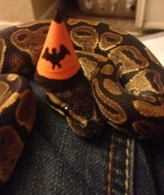Pictures of cute snakes with hats that will make your day brighter. Not only that, you will know what is the best small pet snakes for beginner. Best Friend Halloween Costumes, Scary Costumes, Cute Reptiles, Reptiles And Amphibians, Snakes With Hats, Best Small Pets, Cute Snake, Baby Goats, Cat Memes