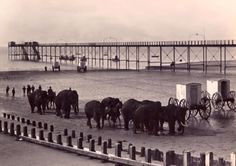 Elephants from Sanger's Circus having a wash in the sea on Bognor beach in Bognor Regis, Sea Side, Old Images, Where The Heart Is, Elephants, Past, Paradise, England, Horses