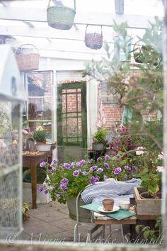 blomsterverkstad   Livet med trädgård, uterum och växter