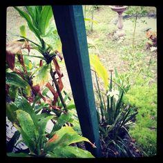 Spring rain in the garden by dgfoley, via Flickr