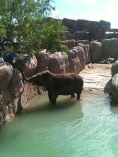 El Paso Zoo.. Miss it so much!
