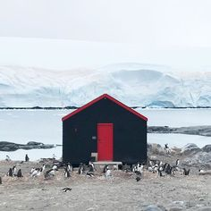 would consider summering here every once a while but only if my neighbors would join me for dinner each night #antarctica