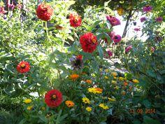 fioritureeeee
