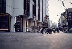 #Repost @r_leica cool shot! Walking dogs in Zürich . . . #fujifilmnordic #fujifilmme #fujifilm_uk #teamfujifilm #myfujifilm #repostmyfuji #fujifilm_sa #fujifilmx_us #fujifilm_northamerica #vsco #vscocam #vscofilm #darkroomapp #igers #street #everybodystreet #streetphotography #igersstreet #streetlife_award #streetlife #dog #switzerland #fujixt2 #fujinon1024 #fujixt2 #bicycle #stgallen #sun @thevisualscollective @agameoftones @ourplanetdaily @visitswitzerland @amazingswitzerland @earthpix…